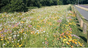 West Berkshire Wild Flower Verge Trial Spring/Summer 2020