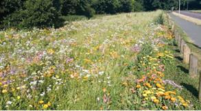 West Berkshire Wild Flower Verge Trial Spring/Summer 2020